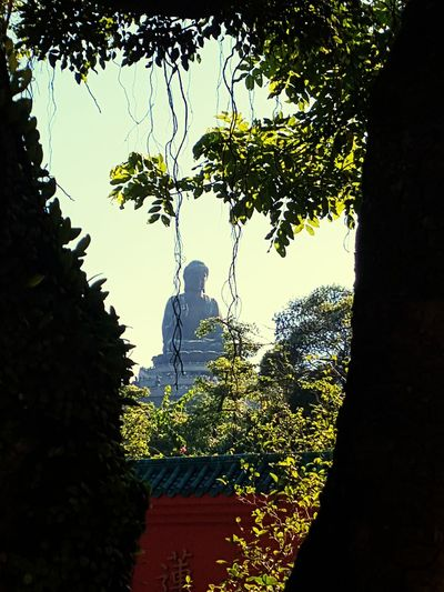 Tree No People Outdoors Travel Destinations Sky Day Architecture Nature Politics And Government Buddha Hongkong Photos Big Buddha Big Buddha Statue