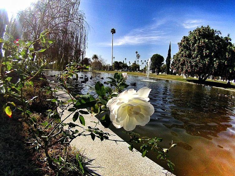 Taking Photos Hollywoodforevercemetery Gopro Hero3 California