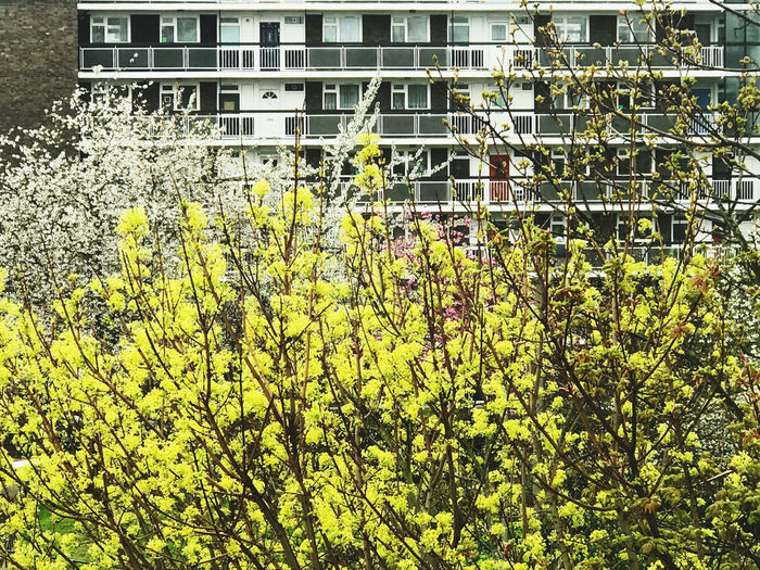 Low angle view of yellow flowering plant against building