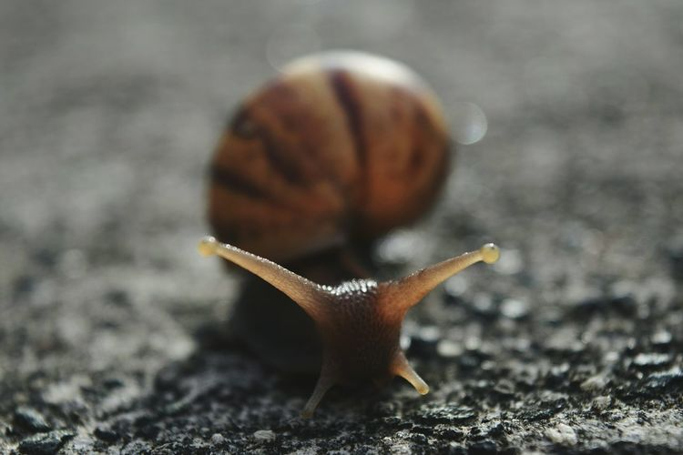 Extreme close-up of snail outdoors