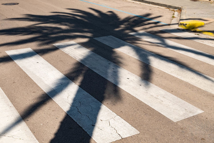 Shadow of palm tree on street