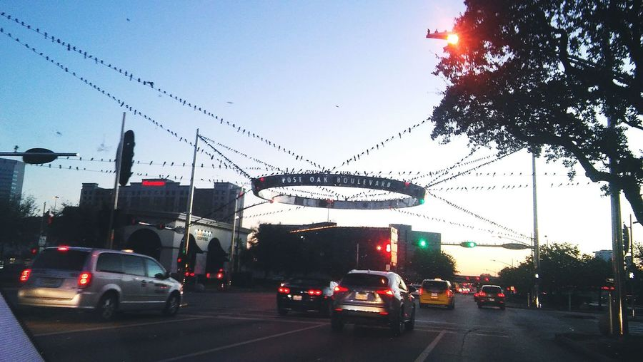 Star of birds, the galleria houston Check This Out