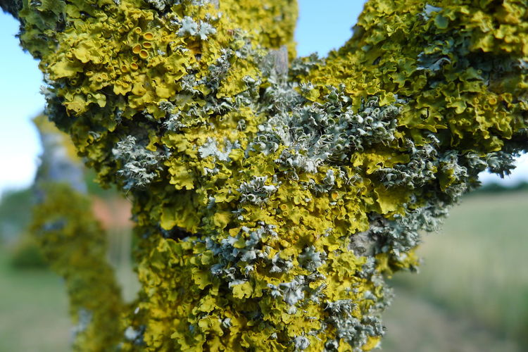 Close-up of yellow flowering plant on tree