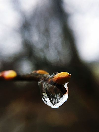 Growth Nature Close-up Growth Bud Rainy Weather Reflection Wet Weather Micro Photography RainDrop Close-up No People Fragility Outdoors Freshness