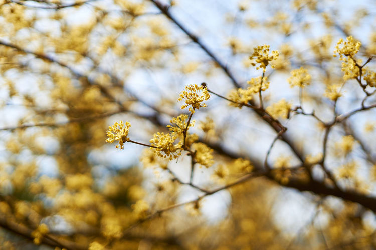 Close-up of buds growing on tree during springtime