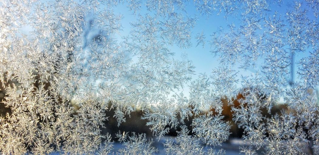 Frost On The