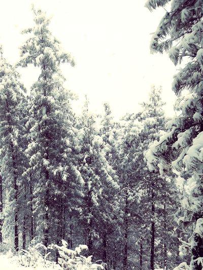 snowfall Wild Beauty # Snow On Tree #snow #winter #snowflakes #snowwhite EyeEmNewHere