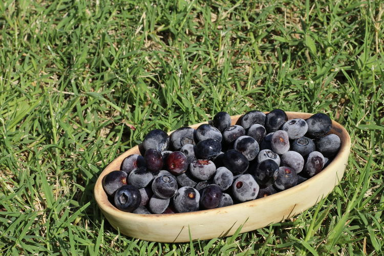 High angle view of blue berros fruits in grass
