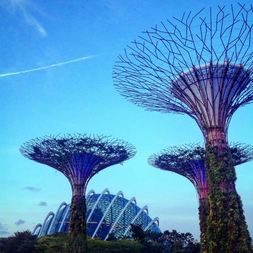 Singapore Tree Low Angle View Blue Sky No People Outdoors Built Structure Nature The Bay Garden By The Bay Day Growth Beauty In Nature View Cloud Dome Gardens By The Bay Neighborhood Map
