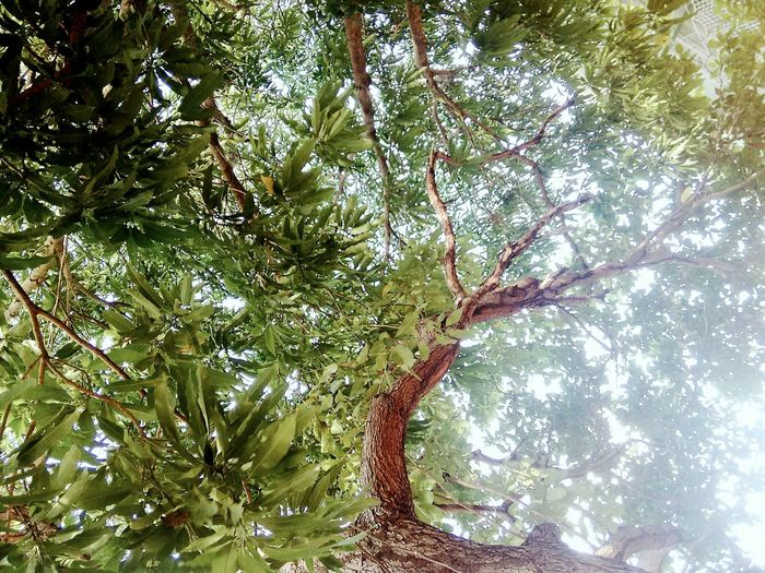 🍃🌿☀ Tree Nature Growth Low Angle View Beauty In Nature Full Frame Backgrounds No People Green Color Tranquility Outdoors Day Sky EyeEmNewHere Photographymobile Natureza Place Of Heart Live For The Story
