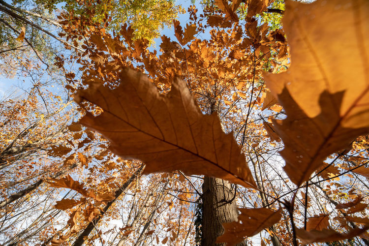 Autumn Leaf Plant Part Tree Plant Change Nature Orange Color Day No People Beauty In Nature Leaves Branch Low Angle View Close-up Outdoors Maple Leaf Growth Tranquility Maple Tree Natural Condition Fall Autumn Collection