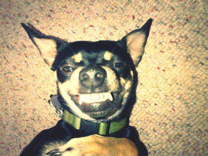 Friend's Crazy Dog Haha