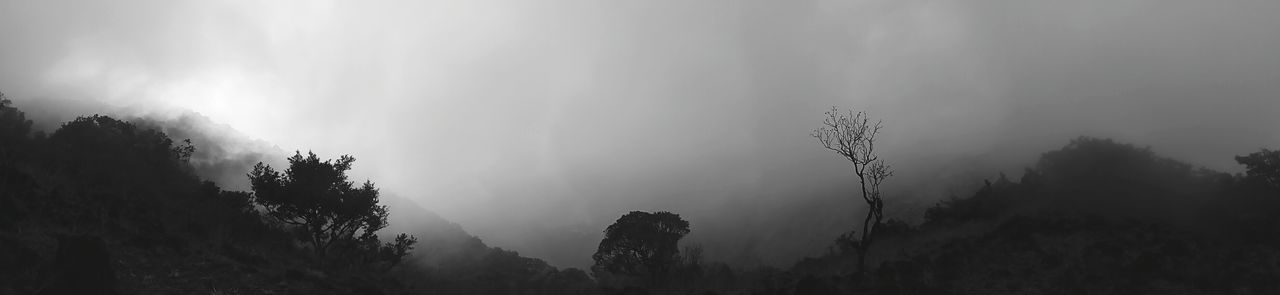 monochrome weekend 👻👻👻 . Monochrome Weekend Monochromatic Memories Enchanting India Mobilephotography Low Light Panorama ASIA EyeEm Selects Focus On Foreground Taking Photos Simple Quiet Love Light And Shadow Blackandwhite Monochrome Fog Tree Forest Nature Outdoors Silhouette Travel Destinations No People Pine Tree Mountain Vacations Tree Area Beauty In Nature Landscape Day Sky