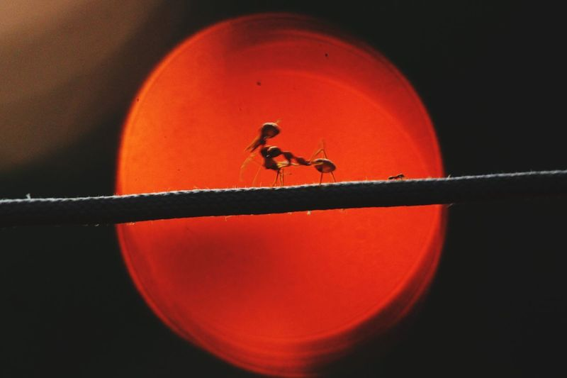 Close-up of insect on glass against black background