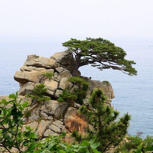The Pine Cliff Eastsea Southkorea Bluewaters Mustgo travelpics travelphotography photowalk ihithro instago instagood instagram instawalk instamorning शुभोदय