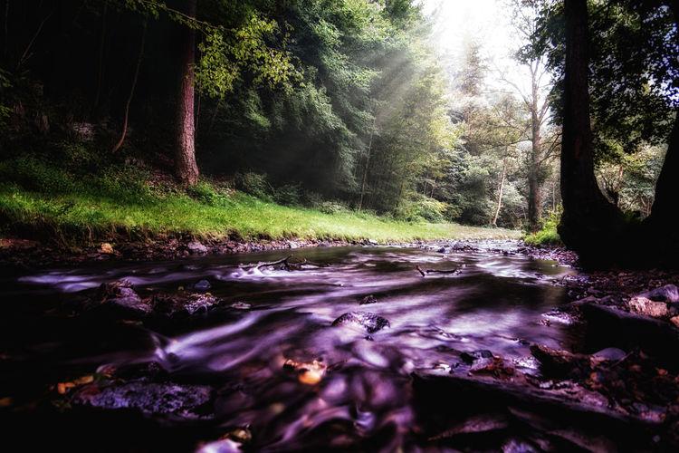 Dreaming Longtime Exposure ND Filter Nikon Riverside WoodLand Germany Longtimeexposure Nikonphotographer River