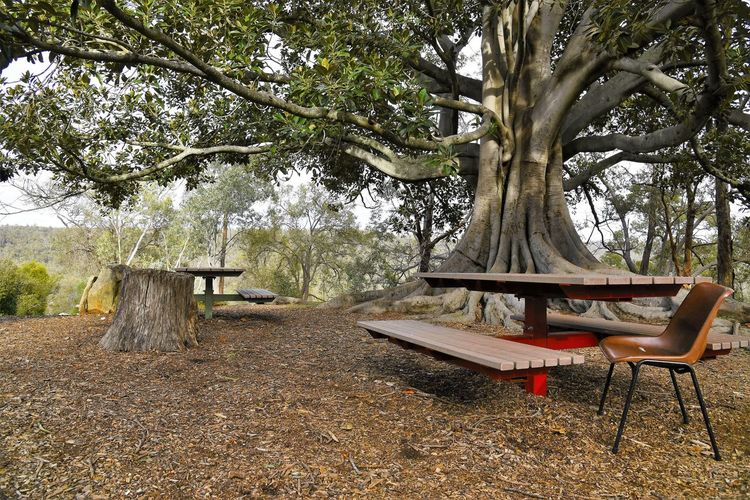 Chair by picnic benches on field against tree