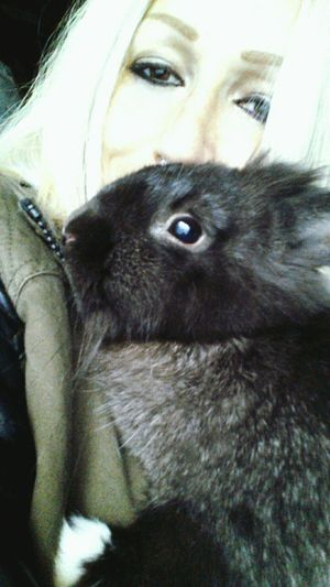 This is Andrew. Family grows ❤ Animallovers Rabbit ❤️ Lionhead Bunny 🐰 Baby Rabbit Lapinou Lapin Hello World Tomuchlove