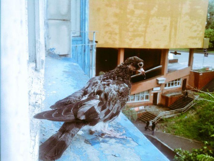 Oldbird Urban Nature
