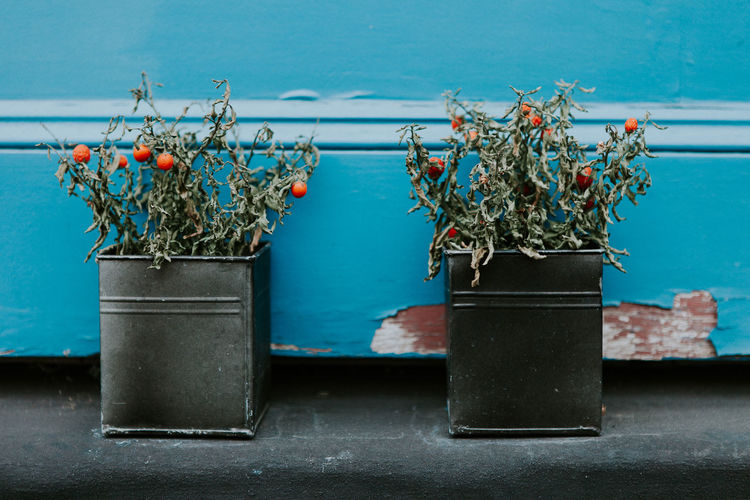 London Streets Ann Ilagan Photography Blue Close-up Container Day Decoration Flower Flower Pot Flowering Plant Growth Leaf Metal Nature No People Outdoors Picadillycircus Plant Plant Part Potted Plant Still Life Table Wall - Building Feature