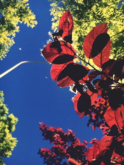 Nature Tree Sky No People Plant Part Leaf Low Angle View Outdoors Autumn