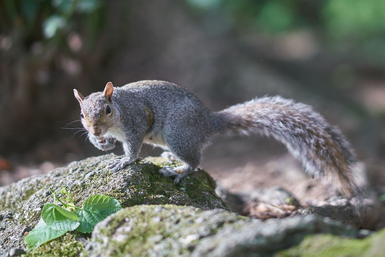 Squirrel Animal Nature Color Animal Wildlife Portrait Squirrel Tail Rodent Close-up Animal Themes