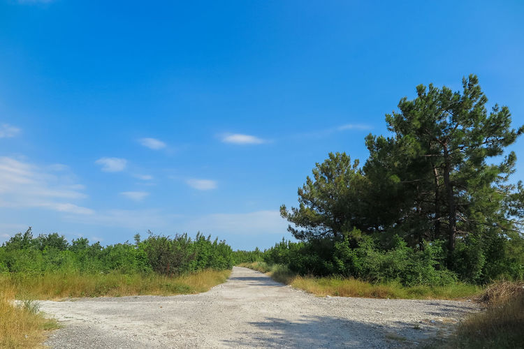 view of the fork, blue sky and trees Plant Tree Road Sky Direction Transportation The Way Forward Tranquility Growth Nature No People Day Tranquil Scene Blue Beauty In Nature Cloud - Sky Non-urban Scene Grass Land Empty Road Diminishing Perspective Outdoors