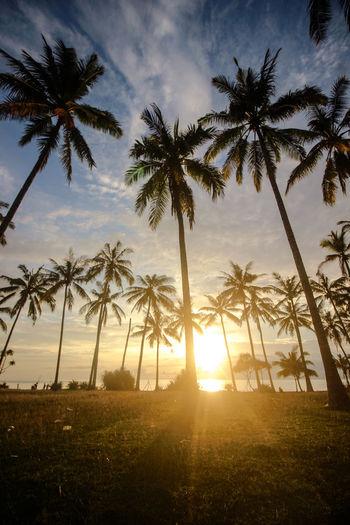 Plant Sky Palm