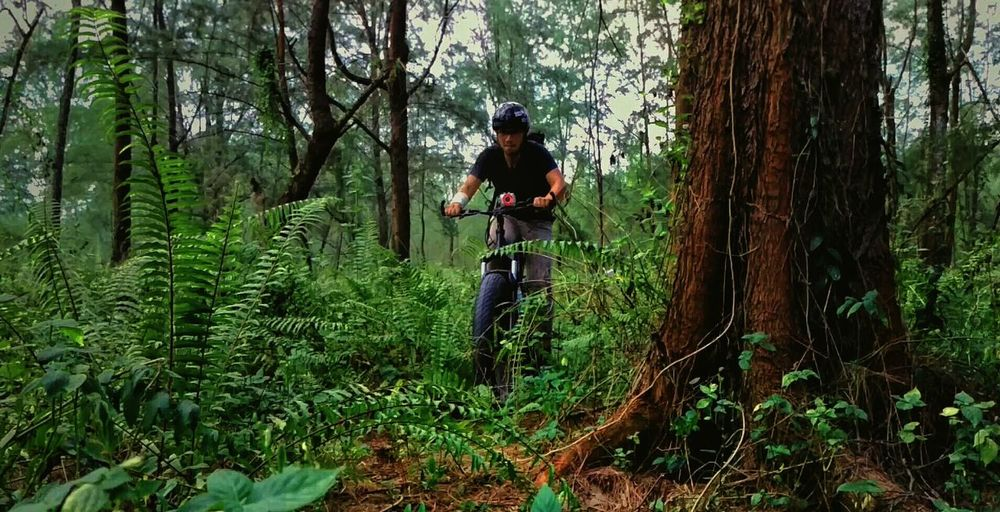 Man Cycling By Trees At Forest