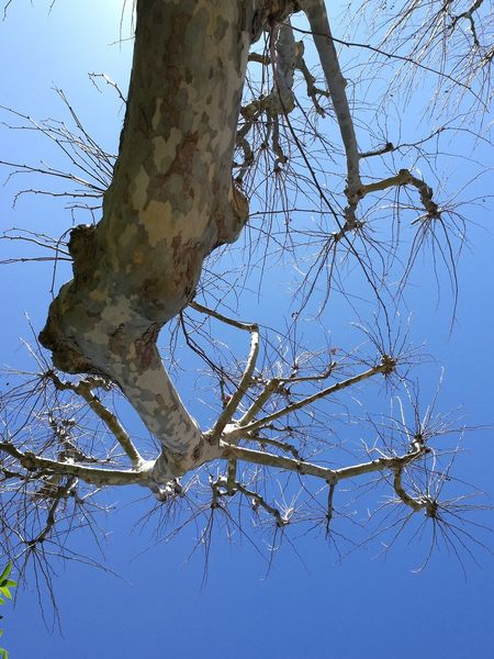 Upside Down Tree Blue Sky Grouth Tree Nature Clear Sky No People Day Water Outdoors EyeEmNewHere