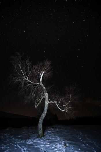 Night Lights Night Photography Nightphotography Nikon Nikon D850 Sigma Sigma Lens Skyline Sterne  Sternenhimmel Night Nightlife Nightshot Nightsky Nikonphotography Sky Sky_collection Skyporn Star - Space Star Field Stars Sternennacht