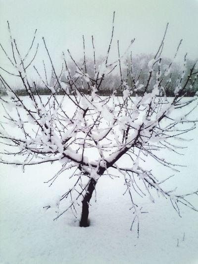Winter Russia Wood EyeEm Nature Lover