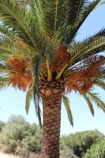 Palmera Low Angle View Nature Sky Palm Tree