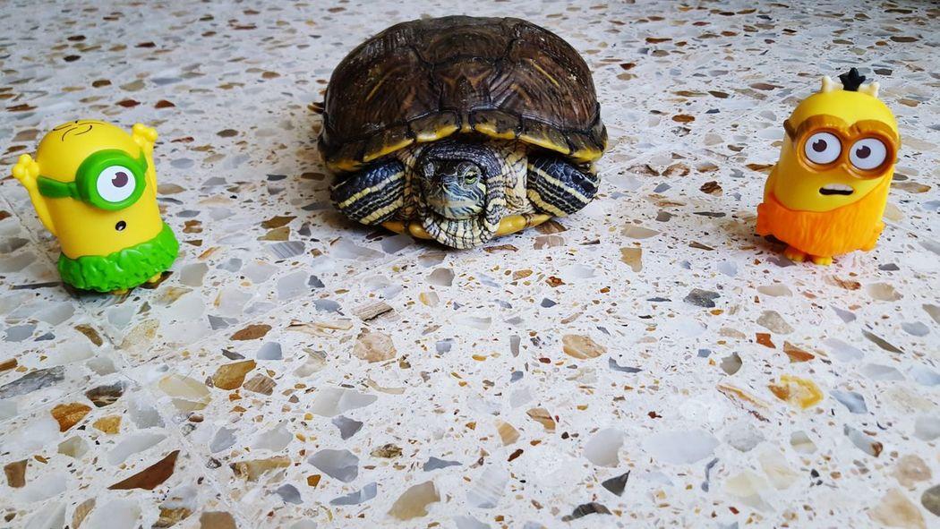 Tortoise Minions Tortoiselife Minions ♥♥ Minion Love Mcdonalds