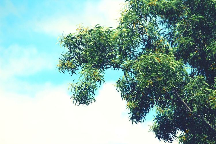 Sky Clouds And Sky Tree Branch Tree Area Forest Leaves Leaf