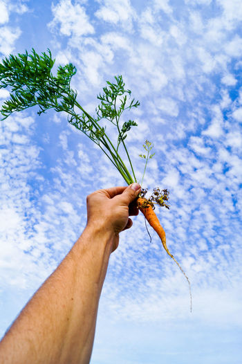 Cropped Image Of Man Holding Carrot Against Sky