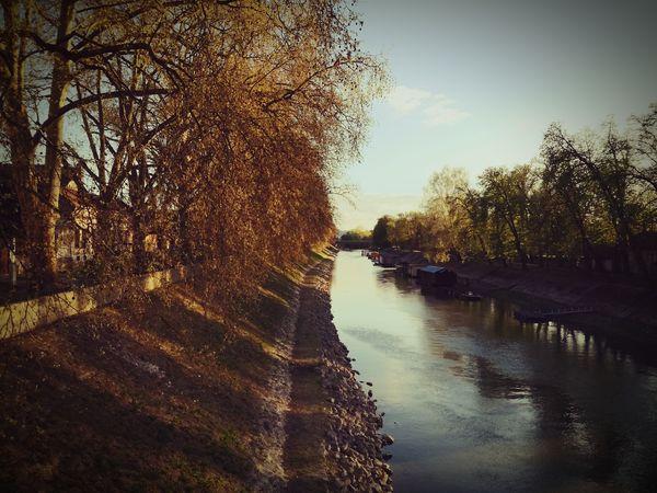 Danube Danube Mobilephotography Sun EyeEm Best Shots Eyemphotography Sunset Chill Tree Water Pixelated Reflection Sky Idyllic Orange Color Shining The Great Outdoors - 2018 EyeEm Awards