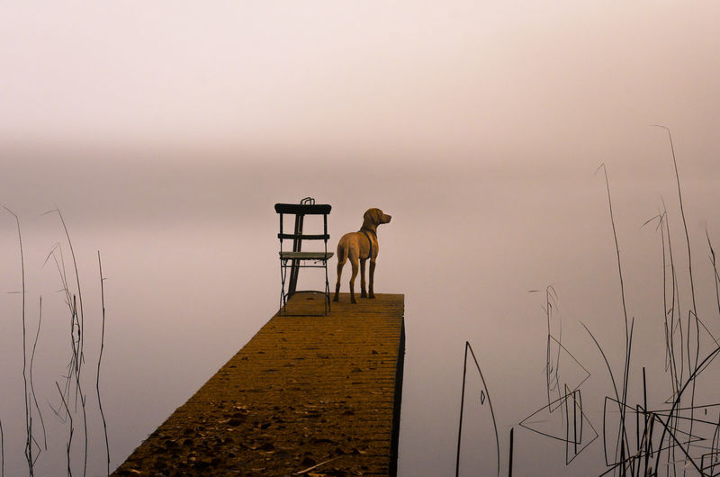 Animal Themes Autumn Autumn Colors Autumn Leaves Beauty In Nature Chair Day Domestic Animals Fog Folding Chair Landscape Magyar Vizsla Mammal Mood Morning Light Nature No People One Animal Outdoors Reeds Runway Tranquil Scene Tranquility Viszla Water