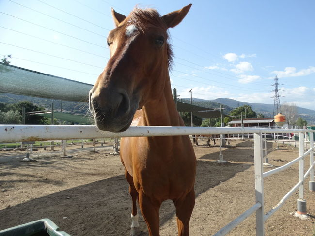 Horse One Animal Sky Outdoors Sunlight Day Club No People