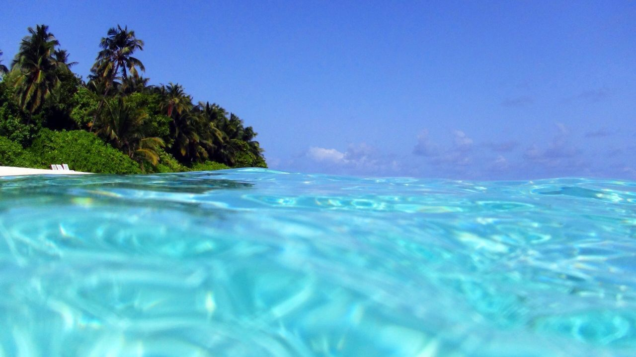 water, blue, sea, tree, waterfront, nature, sky, tropical climate, no people, beauty in nature, pool, swimming pool, day, scenics - nature, palm tree, tranquility, plant, tranquil scene, clear sky, outdoors, turquoise colored, surface level, purity