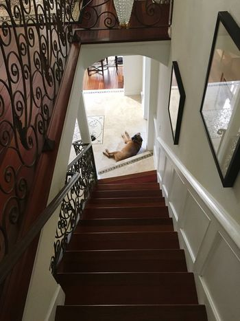 My Girl ❤ Boxer Dogs My Home At Home Chilling Stair Case Wood Floors Check This Out Looking Down From My Point Of View The Way Forward Pets Dog My Best Friend❤