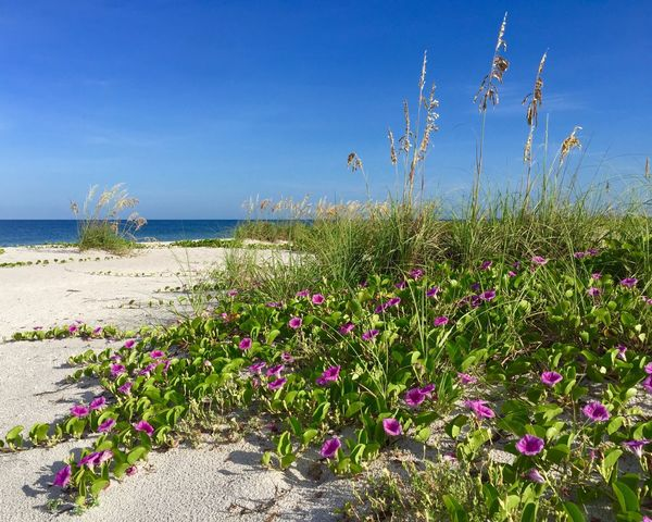 Beauty In Nature Sea Beachphotography