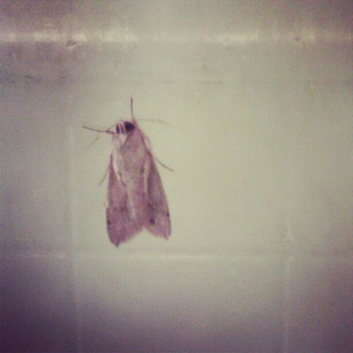 This pervert was caught watching me shower!