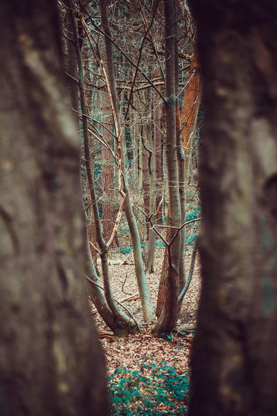 Beauty In Nature Branch Close-up Day Forest Growth Looking Through The Trees Lots Of Leaves Nature No People Outdoors Plant Tranquility Tree Tree Trunk Trees Vibrant Color Walk In The Forest Walk In The Woods WoodLand Narrow Viewpoint TCPM Lost In The Landscape Perspectives On Nature