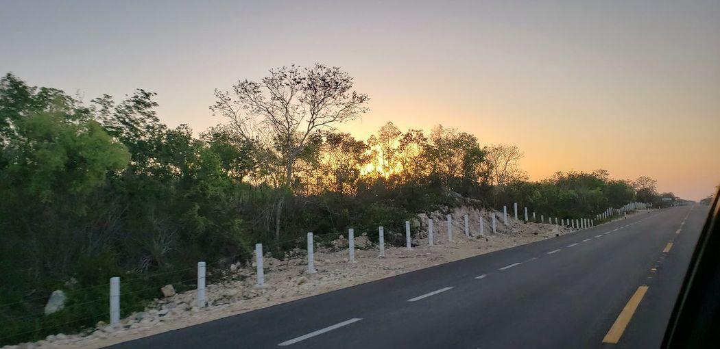 The Great Outdoors - 2019 EyeEm Awards Tree Road Sunset Sky