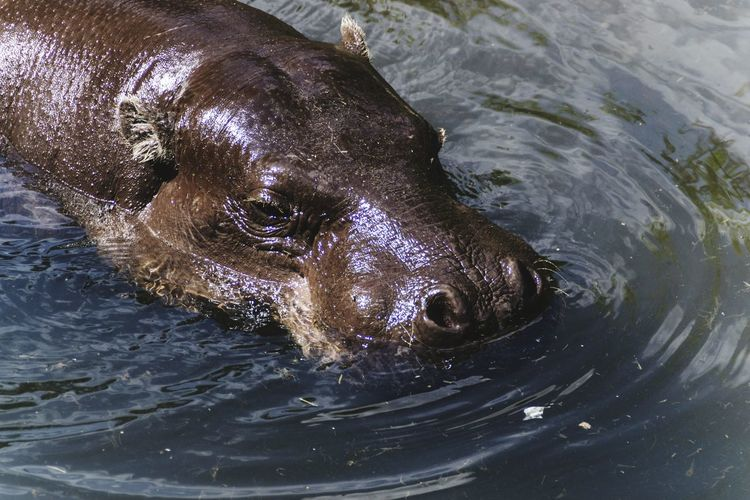 Close-Up Of Animal Swimming In Water