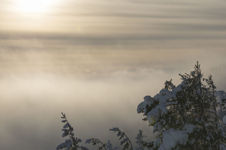 Sky Beauty In Nature Scenics - Nature Cloud - Sky Non-urban Scene Nature No People Tranquil Scene Sunrise Cloudy Day Top Of The Mountains Snow Covered Wintertime Sunlight And Shadow Evergreen Tree White Landscape High Horizon Snowy Trees Colorful Peak Summit Travel Winter