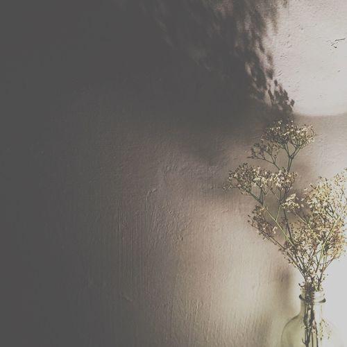 Flowers Shadow