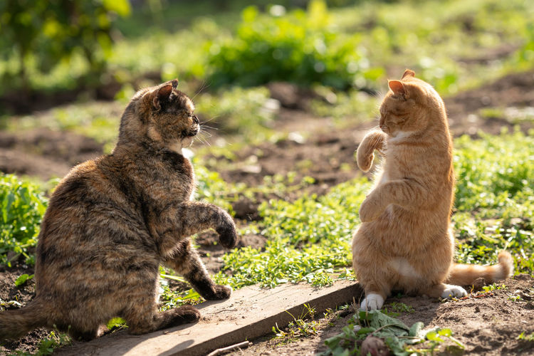 View of two cats sitting outdoors