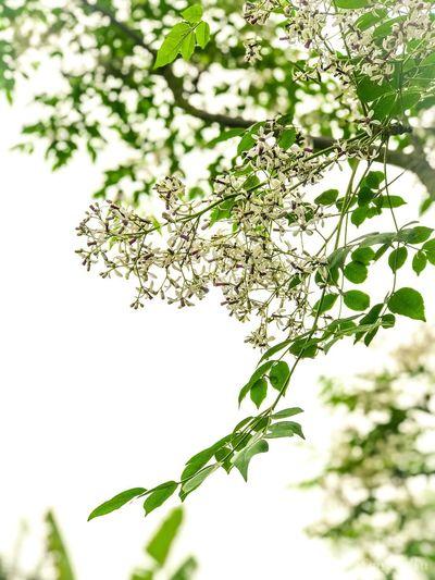 Mùa xuân Plant